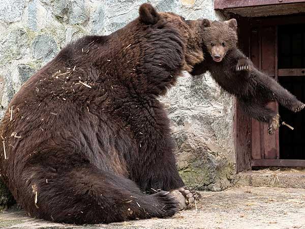 Дисциплина по мечешки