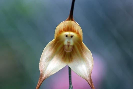 На маймуни и вампири – виж снимките