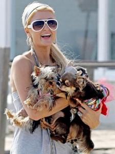 С кучетата си