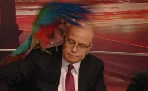 Слави Трифонов сериозно се е замислил да се отърве от папагала в шоуто си. Водещият буквално вече не може да понася  животното, което си прави каквото поиска.