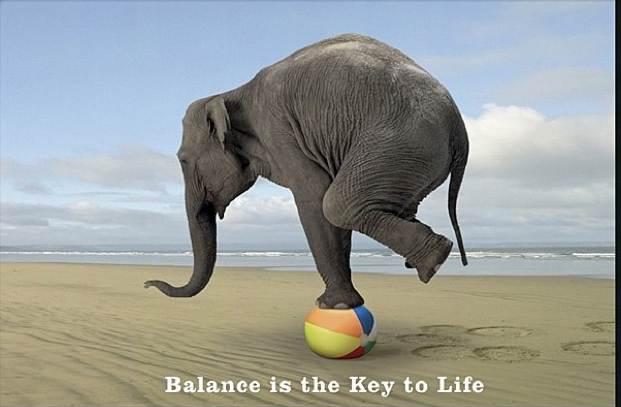 слон с топка