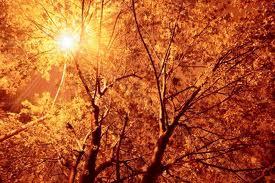 Сензация: В Австралия дърветата раждат злато!