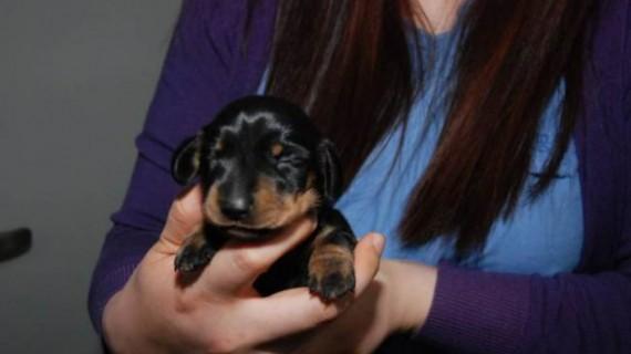 Вече клонират кучета