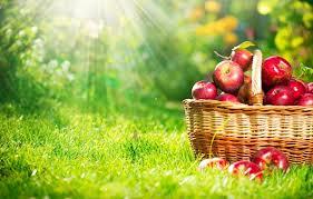 sezonni-dieti