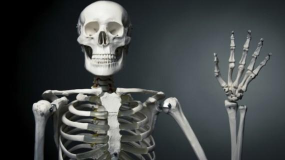 7 любопитни факти за костната система