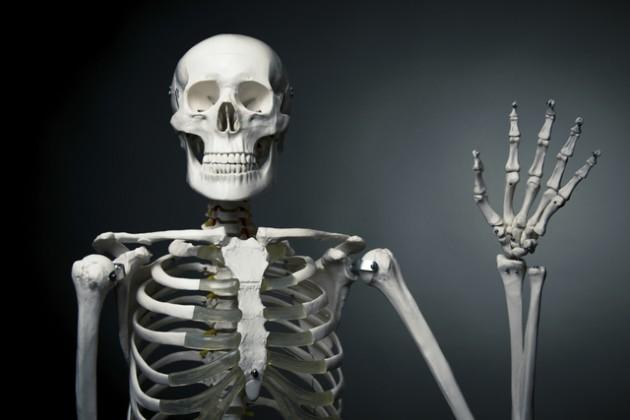skelet-fakti