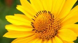7 природни аналгетици
